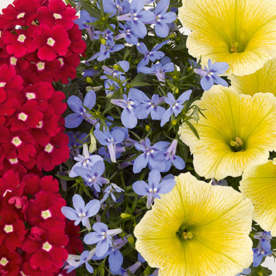 Flower combinations for your SolaRadiance®